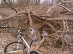 Downed tree at 9 Mile Creek