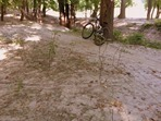 hardened silt on mtb trail, MN River Bottoms