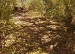 DH jump, Memorial Park Mountain Bike Trails