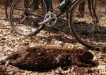 Expired beaver, Crosby Farm Regional Park