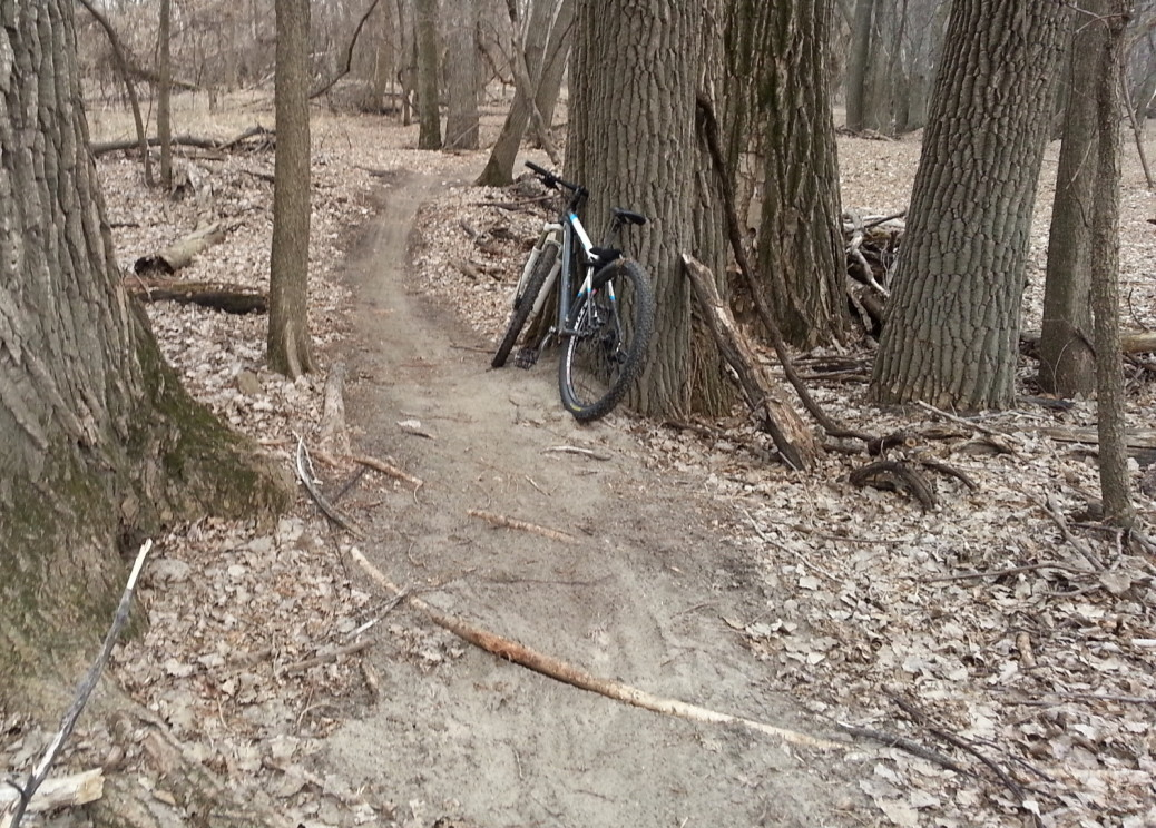 MTB trail over small root, between trees