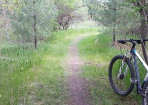 Grass/dirt White-level trail